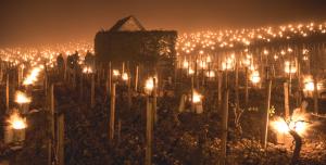 vorst wijngaarden